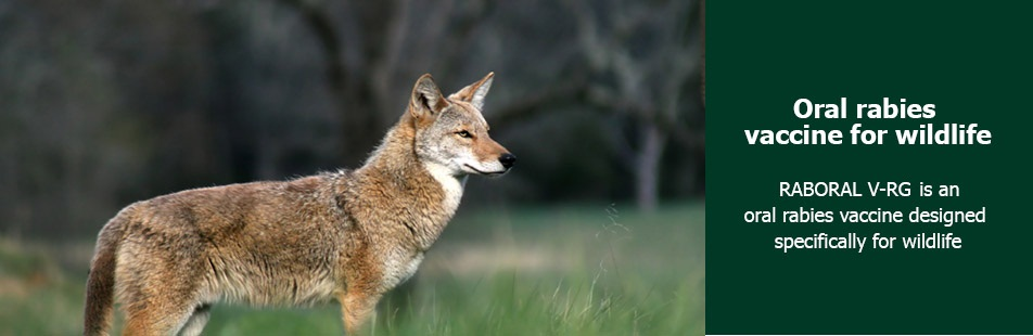 Oral rabies vaccine for wildlife